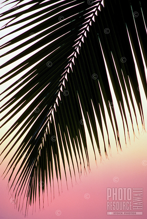 Silhouette of palm frond