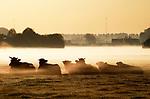 Foto: VidiPhoto<br /> <br /> HERVELD - Ochtendnevel over het boerenland woensdagmorgen, levert dit beeld op. De 'benevelde' koeien van de biologische melkveehouder Villier in Herveld (Overbetuwe) genieten net zo van de natuur en de opkomende zon als de fotograaf dat doet. Nevel ontstaat wanneer de lucht afkoelt tot het dauwpunt en waterdamp condenseert tot kleine druppeltjes.