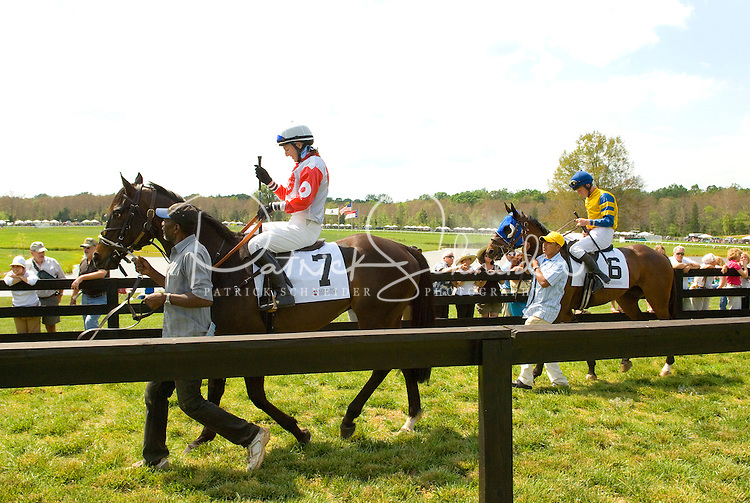 Jockey's, horses and their handlers walk to the start of a race during the Queen's Cup Steeplechase in Mineral Springs, NC.