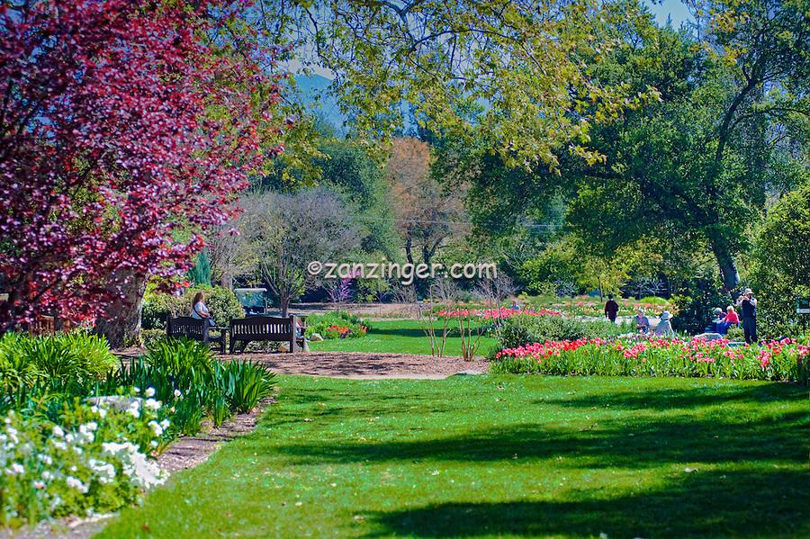 Garden, flowers, grow, mixed, flora, botanic, colorful, blooming, spring, garden, horticulture