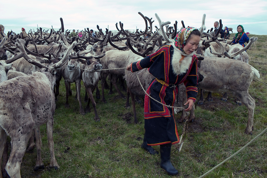 Bovanenkovo ,Yamal Peninsula, Russia, 09/07/2010..A teenage Nenets girl helps round up 5,000 reindeer as the indigenous nomadic reindeer herders head north on sledges to the Russian Arctic coast.