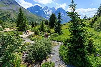 France, Hautes-Alpes (05), Villar-d'Arène, jardin alpin du Lautaret, zone des plantes d'Amérique du Nord, la Meije en fond