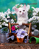 Xavier, ANIMALS, REALISTISCHE TIERE, ANIMALES REALISTICOS, cats, photos+++++,SPCHCATS909,#a#, EVERYDAY