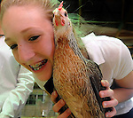 Katy Davis, 13, of Manchester, gives a hug to her chicken Mrs Tofo, as she completed a successful practice session, Friday, August 12, 2011, during the first day of the annual Tolland County 4H Fair at the Tolland Agriculture Center in Vernon, The fair runs through Sunday. (Jim Michaud/Journal Inquirer)
