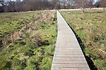 "A wooden boardwalk across wet marshy field forming an art work ""High Water Mark 2048"" by Jonathan Keep, Snape, Suffolk"