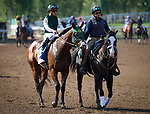 ARCADIA, CA April 7: Bolt D' Oro and Javier Castellano prior to the Santa Anita Derby (Grade I) on April 7 at Santa Anita Park in Arcadia, CA (Photo by Chris Crestik/ Eclipse Sportswire/ Getty Images)