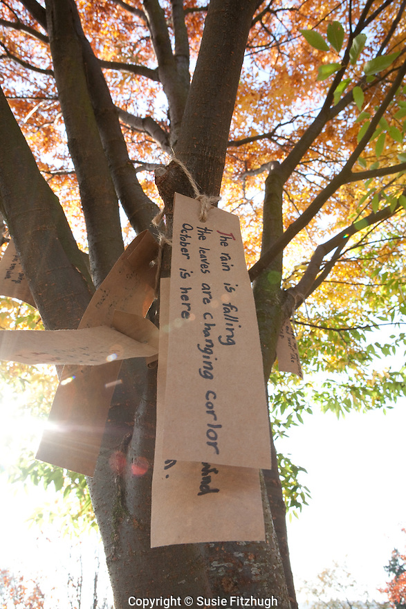 Poetry in the trees of the playground at TOPS K-8 school, Seattle