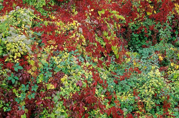 Colorful autumn roadside vegetation near Remigny, Burgundy, France, AGPix_0380..