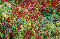 Colorful autumn roadside vegetation near Remigny, Burgundy, France, AGPix_0380..