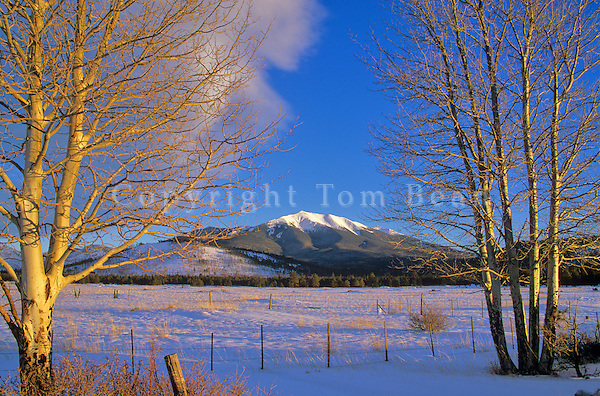 Humphreys Peak in winter, viewed from Kendrick Park along Highway 180, Coconino National Forest, north of Flagstaff, Arizona, AGPix_0305.