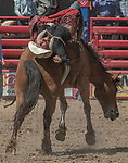 Bareback rider Cody Higgins from Red Buff, California holds on at the 68th annual Oakdale Saddle Club Rodeo on Sunday, April 14, 2019.  (Al Golub/Record Photo)