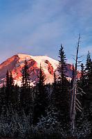 Mount Rainier framed by subalpine trees, Reflection Lakes, Mount Rainier National Park, Washington, USA