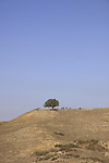 Israel, Negev, Tamarisk tree on Tel Nagila