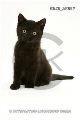 Kim, ANIMALS, fondless, photos(GBJBAK587,#A#) Tiere ohne Fond, animales sind fondo