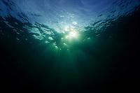 Underwater Sunrays Strait of Georgia, British Columbia, Canada.