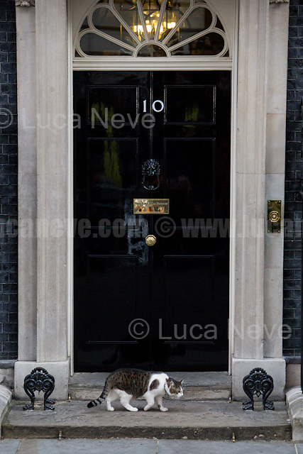Larry (10 Downing Street cat and Chief Mouser to the Cabinet Office).<br /> <br /> London, 09/06/2017. Today, the newly elected British Prime Minister, Theresa May, speaks outside 10 Downing Street to announce the result of the General Election 2017, where the Conservative Party lost its parliamentary majority and the election resulted in a hung Parliament, and to inform the public that she will form her new minority Conservative government in coalition with the Democratic Unionist Party (DUP - http://bit.ly/2s93eHf), the largest unionist political party in Northern Ireland led by Arlene Foster. Earlier, Theresa May and her husband, Philip John May, went to Buckingham Palace to meet HM Queen Elizabeth II seeking the permission to form May's second Government as British Prime Minister.<br /> After 5 years of the Coalition Government (Conservatives &amp; Liberal Democrats) led by the Conservative Party leader David Cameron, and one year of David Cameron's Government (Who resigned after the Brexit victory at the EU Referendum held in 2016), British people voted in the following way: Conservative Party 318 seats (42.4% - 13,667,213 votes &ndash; 12 seats less than 2015), Labour Party 262 seats (40,0% - 12,874,985 votes &ndash; 30 seats more then 2015); Scottish National Party, SNP 35 seats (3,0% - 977,569 votes &ndash; 21 seats less than 2015); Liberal Democrats 12 seats (7,4% - 2,371,772 votes &ndash; 4 seats more than 2015); Democratic Unionist Party 10 seats (0,9% - 292,316 votes &ndash; 2 seats more than 2015); Sinn Fein 7 seats (0,8% - 238,915 votes &ndash; 3 seats more than 2015); Plaid Cymru 4 seats (0,5% - 164,466 votes &ndash; 1 seat more than 2015); Green Party 1 seat (1,6% - 525,371votes &ndash; Same seat of 2015); UKIP 0 seat (1.8% - 593,852 votes); others 1 seat. <br /> The definitive turn out of the election was 68.7%, 2% higher than the 2015.<br /> <br /> For more information click here: http://bbc.in/2qVyNRd &amp; http://bit.ly/2s9ob51<br /> <br /> For m