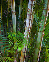 Kauai, HI<br /> Tropical garden ferns and palms on Kauai's north shore near Ha'ena