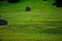Cycling through Alpine farmland passing cattle shelters. Imst district, Tyrol, Tirol, Austria