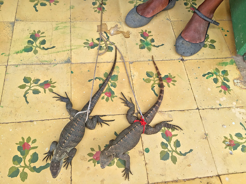 Lizards on a leash in a home in Trinidad, Cuba. MARK TAYLOR GALLERY