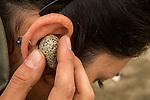 Snowy Plover (Charadrius nivosus) biologist, Karine Tokatlian, listening to chick pecking at inside of egg, Eden Landing Ecological Reserve, Union City, Bay Area, California