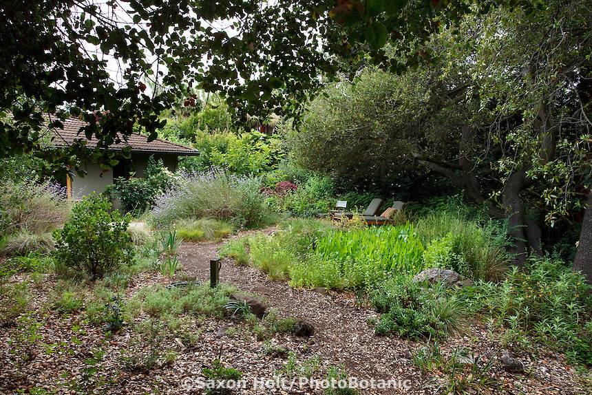 California native plant back yard naturalistic garden with oak trees and leaves as natural mulch, Schino