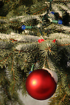 An outside red ornament on a Christmas tree