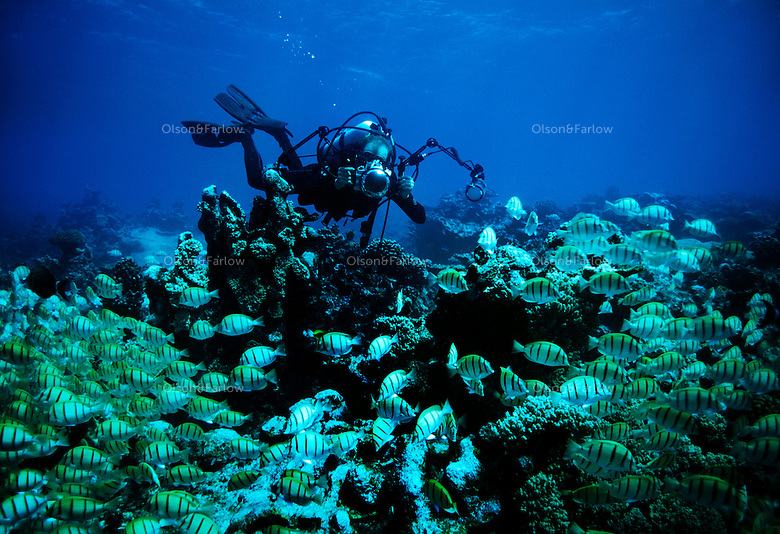 "Photographer Randy Olson working underwater in military canal, Palmyra Atoll.  Olson and Gary Bell were the first to dive this area under the auspices of the Nature Conservancy. The largest purchase to date for the Nature Conservancy is the Palmyra an atoll situated about 300 miles north of the equator.  Palmyra has five times as many coral species as the Florida Keys and three times as many as Hawaii.  It is home to the world's largest invertebrate, the rare coconut crab, and a population of red-footed booby birds second only to that of the Galapagos.  It is the last marine wilderness area left in the U.S. tropics and is home to the last remaining stands of Pisonia grandis beach forest in the world.  Palmyra was a US Navy supply base in World War II, the site of a proposed nuclear waste dump, an unsuccessful coconut plantation and of various development schemes.  Palmyra is most famous for the 1974 slaying  of a married couple which became the subject of the best-selling book ""And the Sea Will Tell,"" by Vincent Bugliosi."