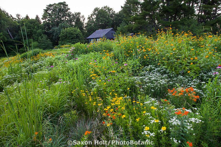 holt_1151_107.CR2 | PhotoBotanic Stock Photography Garden ... on small garden design, wild garden design, cactus garden design, sand design, organic garden design, gravel design, herb garden design,