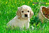 Marek, ANIMALS, REALISTISCHE TIERE, ANIMALES REALISTICOS, dogs, photos+++++,PLMP3162,#a#, EVERYDAY