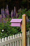 Purple bird house with lupine