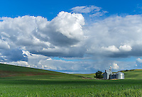 The Palouse, Whitman County, Washington: Summer clouds over silos and grain elevator with rolling wheat fields