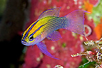 Fish ID Tropical Western Atlantic