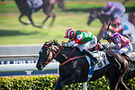 SHA TIN, HONG KONG – December 8: Star Of Yuen Long, ridden by Vincent Ho wins the Highland Reel Handicap on Longines Hong Kong International Race Meeting at Sha Tin Racecourse in Hong Kong. Michael McInally/Eclipse Sportswire/CSM