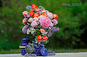 Carl, FLOWERS, photos, SWLA12023,#f# Blumen, Natur, flores, naturaleza
