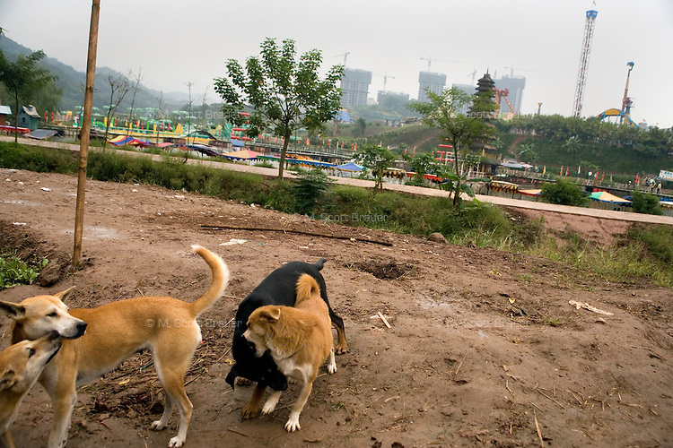 Dogs play near on a muddy road in Chongqing, China.