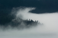 Fog rising in forest