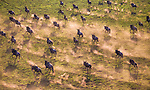 Aerial of wildebeest herd migration, Serengeti National Park, Tanzania