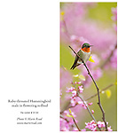 RTHummingbird9134_CARD<br />
