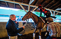 Shug McGaughey, trainer of probable Kentucky Derby favorite Orb, in his barn at Churchill Downs during Derby Week April 29, 2013.