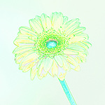 Yellow and blue illustration of a Gerber daisy