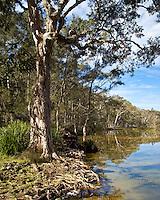 Neranie Bay, Myall Lakes, NSW, Australia