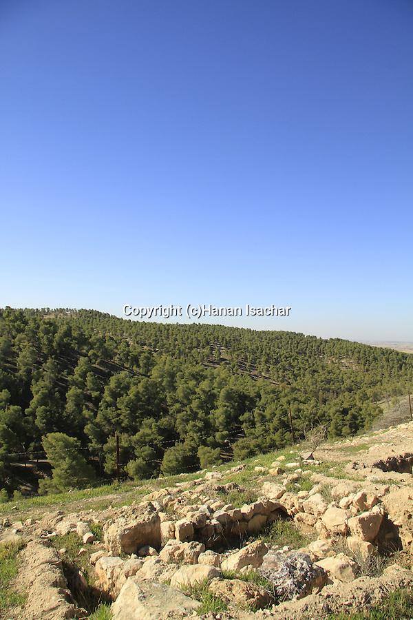 Israel, Shephelah, a view of Lahav Forest from Tel Halif site of biblical Rimmon