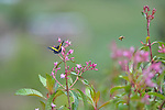 A butterfly and bee on flowers in Comitancillo, Guatemala.