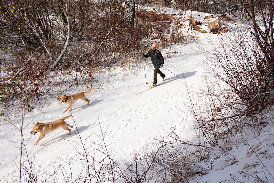 A cross-country skier takes his dogs out for a trip on the Sourdough Canyon trail south of Bozeman, Montana.