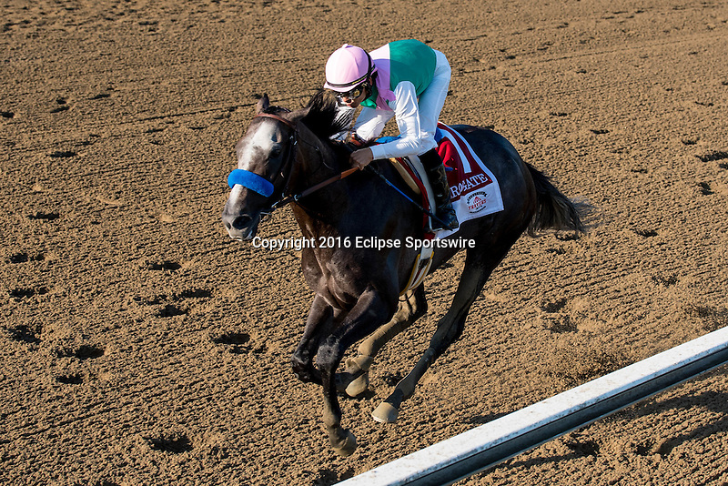 SARATOGA SPRINGS - AUGUST 27: Arrogate #1, ridden by Mike Smith, wins the Travers Stakes on Travers Stakes Day at Saratoga Race Course on August 27, 2016 in Saratoga Springs, New York. (Photo by Dan Heary/Eclipse Sportswire/Getty Images)