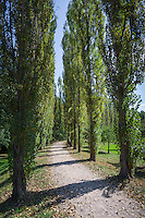 Germany, Baden-Wuerttemberg, Tauber Valley, Bad Mergentheim: poplar alley at Castle Garden | Deutschland, Baden-Wuerttemberg, Taubertal, Bad Mergentheim: Pappelalle im Schlossgarten