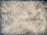 12.30.13 - Pale Field...