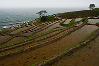 Where the Noto Peninsula tumbles steeply down into the Japan Sea, the land is terraced in over a thousand rice paddies, still farmed the traditional way.