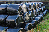 Black,big bales of silage  at Dinkling Green Farm, Whitewell, Forest of Bowland, Lancashire.