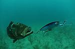 SPORT FISHING GROUPER